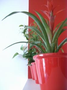 pflanzen rot-weiß-grün