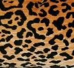 leopard_texture