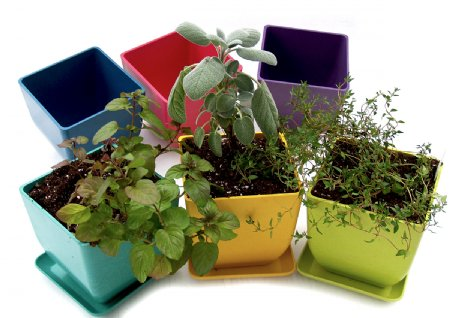 Pots with herbs from tastefulgarden.com